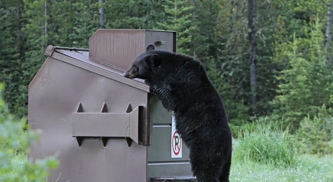 Полицията спаси мечка, заклещила се в контейнер за боклук