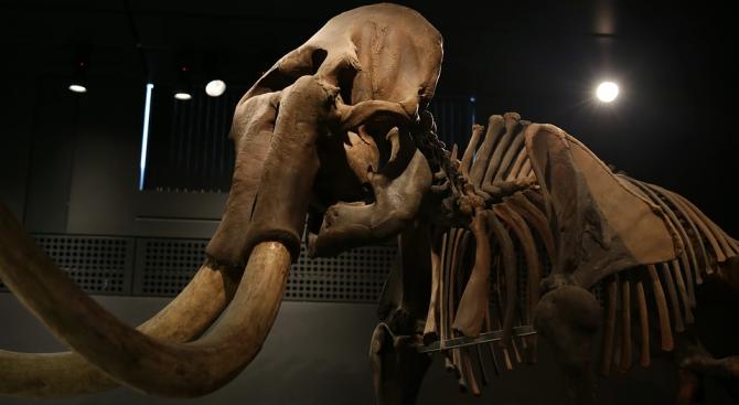 """Учени откриха праисторически """"капани за мамути"""" в Мексико"""