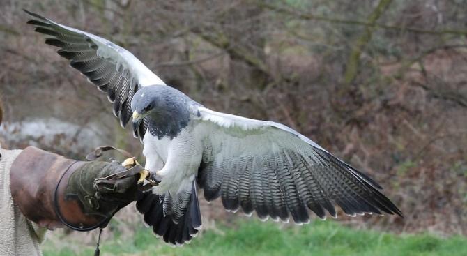 Конфискувани пари с престъпен произход отиват за защита на застрашени птици