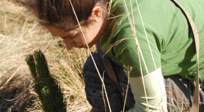 Доброволци участваха в Голямото пернишко засаждане