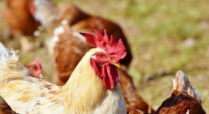 БАБХ започва строг контрол върху антибиотиците и хормоните за животни