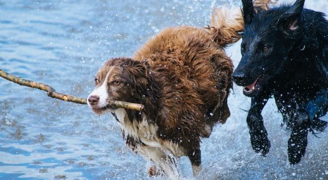 Три жени се удавиха в Словакия при опит да спасят кучета от наводнен приют