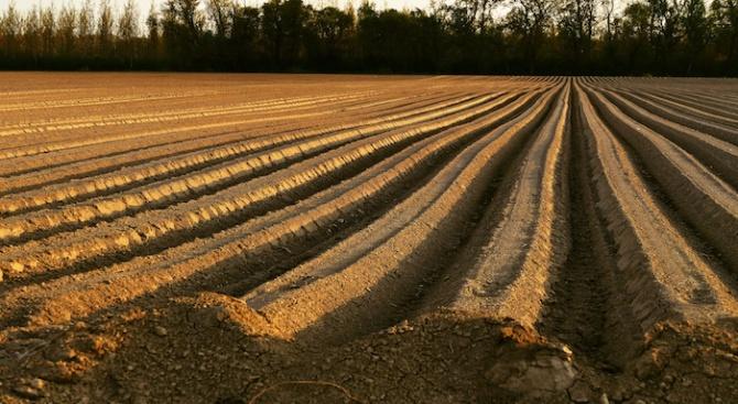 Над 440 000 декара с пшеница са засети досега в Силистренско