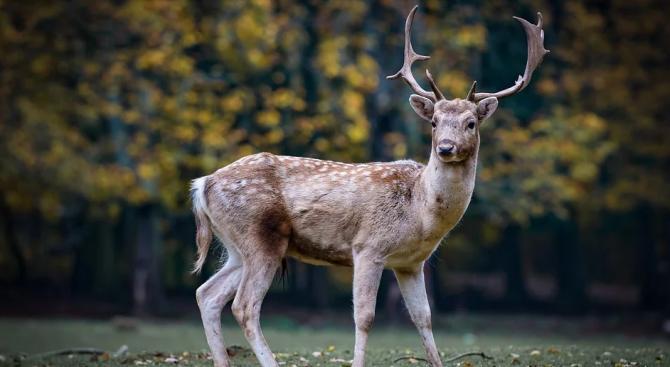 Забелязаха трирог елен в американския щат Мичиган