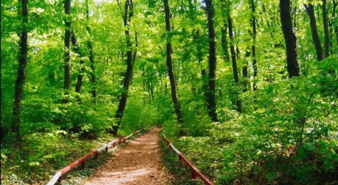 """Премахнаха опасни клони по туристическа пътека в природния парк """"Шуменско плато"""""""