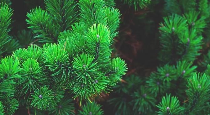 Коледното дърво в Стара Загора грейва на 5 декември