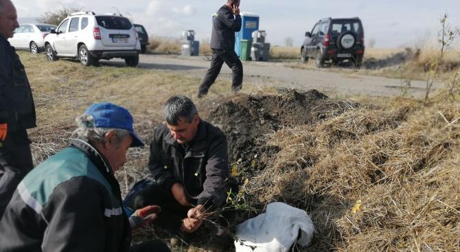 """""""Новата гора на София"""" е пораснала с още 25 декара за двата уикенда от залесителната кампания"""