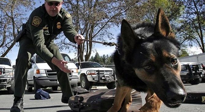 Клонираха полицейски кучета в Китай