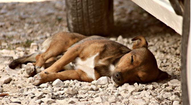 Шофьор блъсна куче и избяга