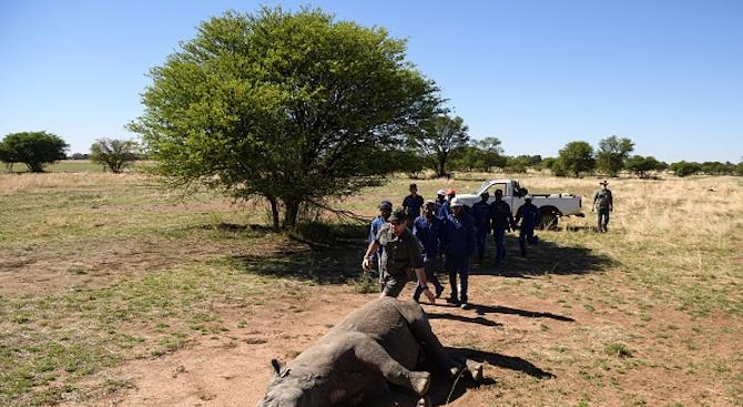 Заловиха бракониери, избили 100 носорога в Южна Африка