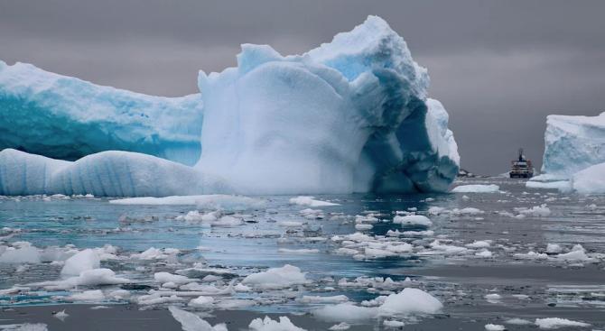 Инвазивни видове застрашават Антарктида