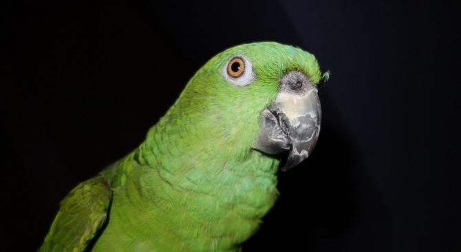 Откраднаха рядък папагал от Центъра за защита на природата в Добрич