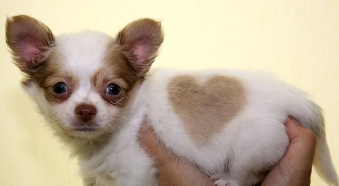 Куче роди 21 малки