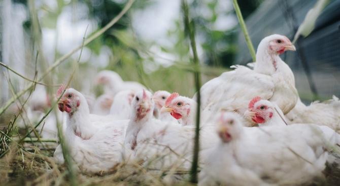Откриха огнище на Нюкасълска болест по птиците на 11 км от България