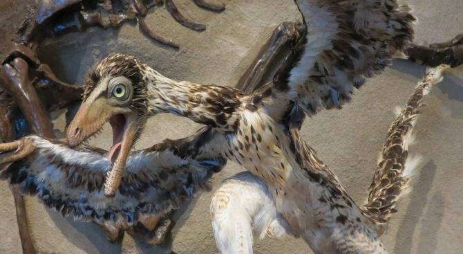 Динозаврите с пера са имали въшки