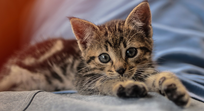 Коте оцеля след къпане в пералня