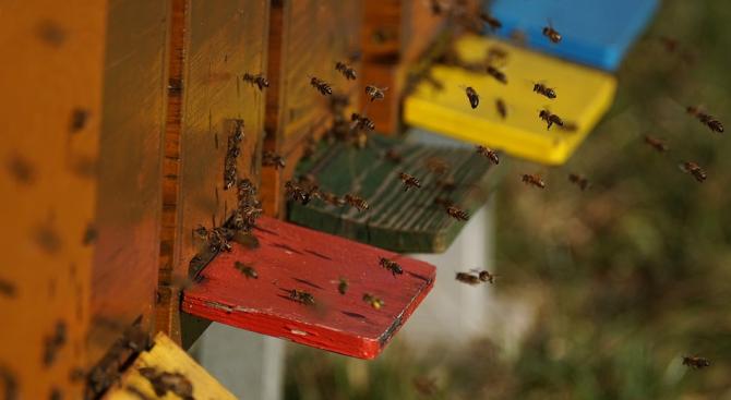 Ниските изкупни цени убиват бранша, оплакаха се пчелари