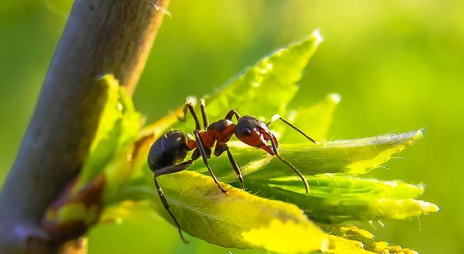 Новооткрит вид мравки ще носи името на новозеландската премиерка