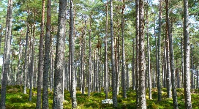 650 000 дървета бяха засадени в Азербайджан за един ден