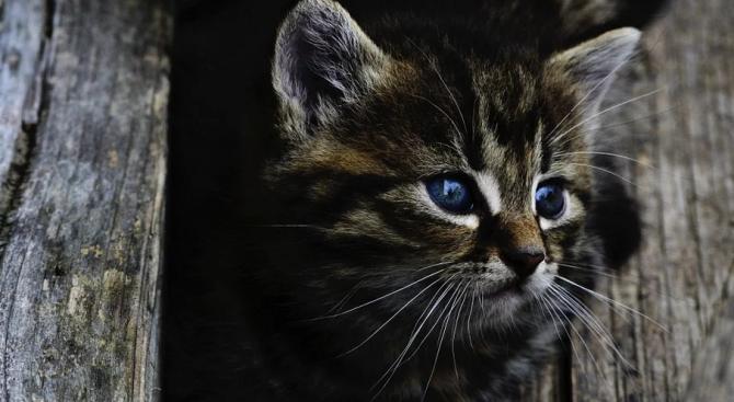 Сериен убиец на котки уби над 100 само за месец в Бургас