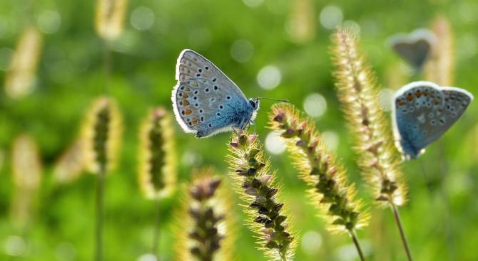 Обезвредени са 3861 тона пестициди по българско-швейцарски проект до края на октомври