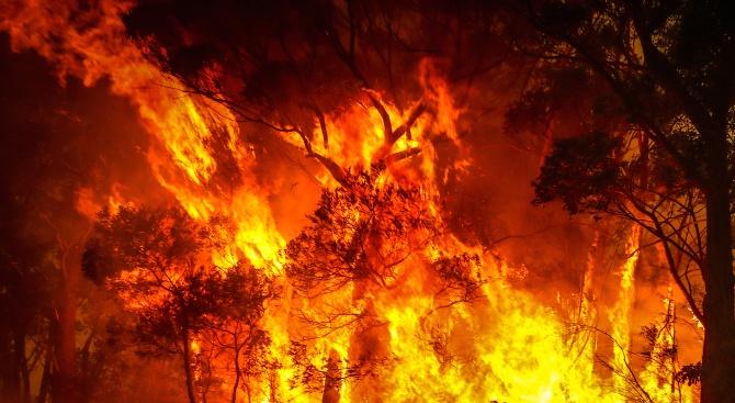 Утихването на пожарите подари Коледа на австралийски огнеборци
