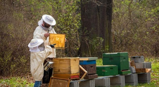 Пчелари засадиха медоносни фиданки във Видинското