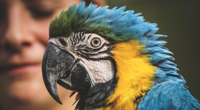 Полицията се отзова на сигнал за човек в беда, оказа се... папагал