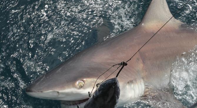 Рибари извадиха чудовище от Егейско море