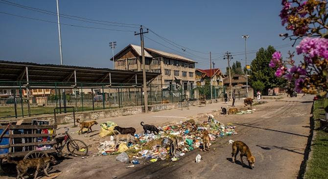 Кучета разкъсаха новородено в Индия