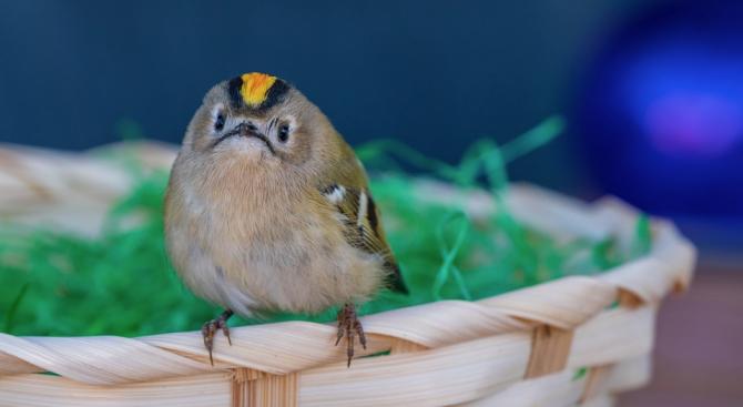 Задържа белгиец с 20 птици в куфара си на летището в Перу