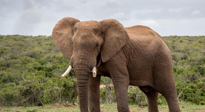 Хотел забавлява гостите си със... слон