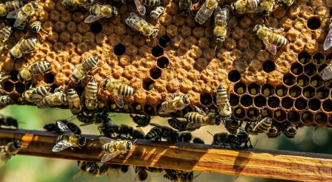 Пожарите в Австралия са поразили убежището на рядък вид пчели