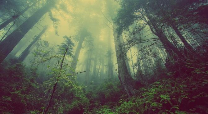 МЗХ с информация за закупуването на малки горски имоти