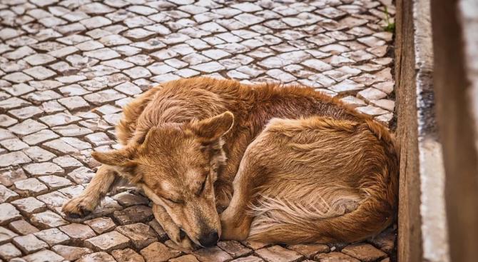 Община Хасково и зооактивисти слагат край на проблема с бездомните кучета