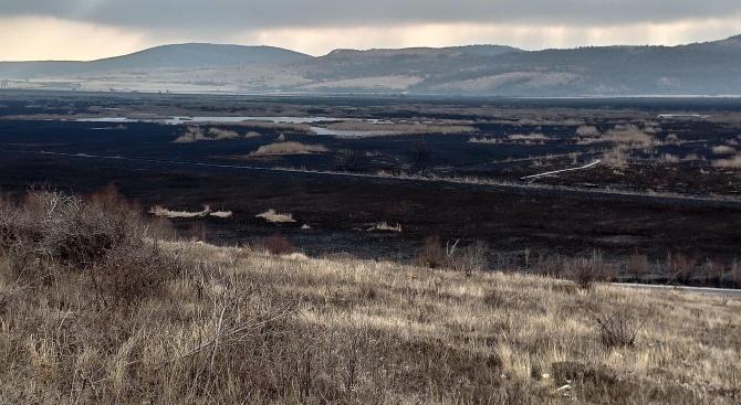 Над 80% от територията на Драгоманското блато е засегната от пожара