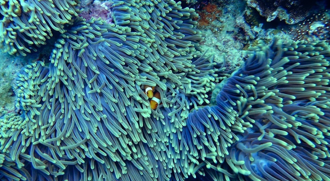 Кораловите рифове в целия свят може да изчезнат до 2100 г.