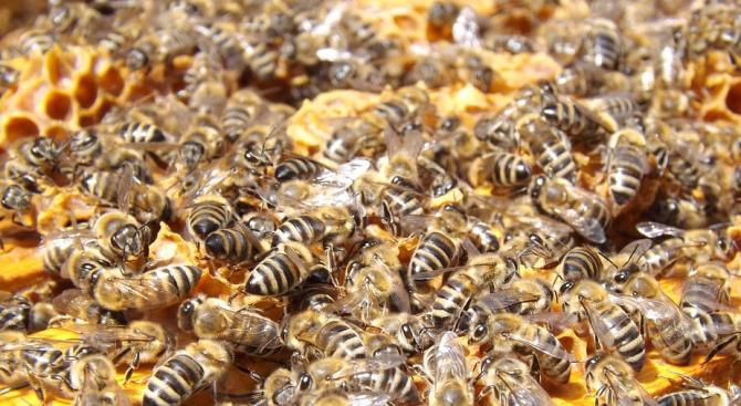 Отцепиха квартал в Калифорния, заради агресивни пчели