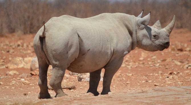 """Носорог """"налага"""" спазването на карантината в селище в Непал"""