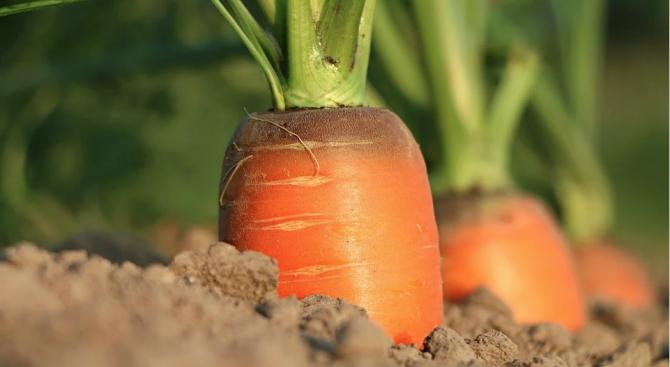 Рекордьор на Гинес изхранва цяла улица с гигантски зеленчуци