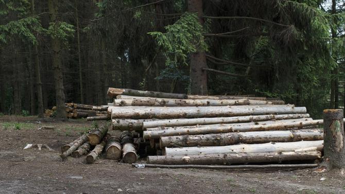Нарушения в сечища край Говедарци разкри проверка