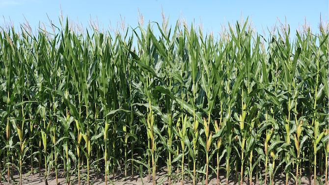 """ДФ """"Земеделие"""" проверява на терен на фермерите, искащи субсидии"""