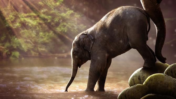 В зоопарка в Сейнт Луис се роди слонче за първи път от 27 години насам