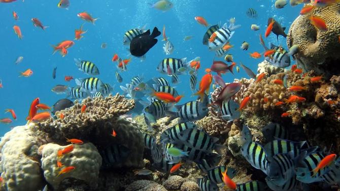Глобалното затопляне застрашава рифовите риби