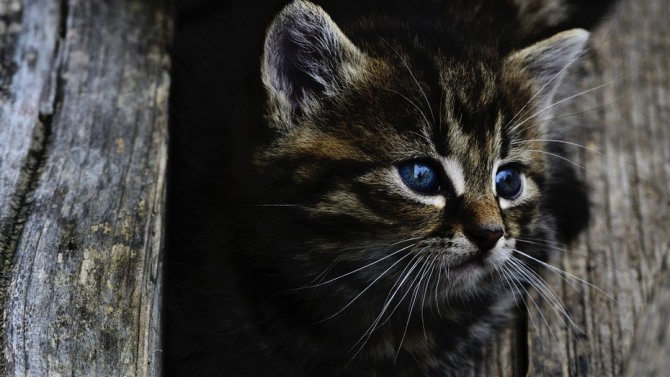 Бездомна котка помогна на съпрузи да забогатеят