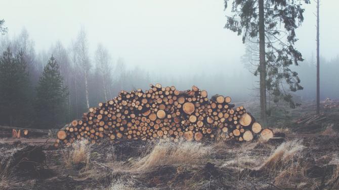 Брошура ще разяснява снабдяването със законно отсечени дърва за огрев