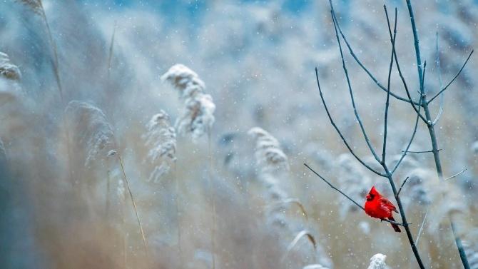 Синоптик прогнозира кога ще падне първият сняг