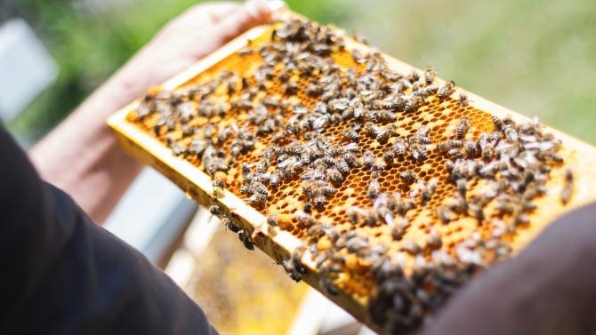 300 пчелари и 200 фермери с регистрация в сигналната платформа за пестициди