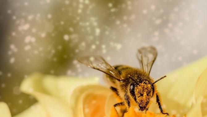 """Пчелари определят 2020 година като много трудна заради сушата и """"синдрома на празния кошер"""""""