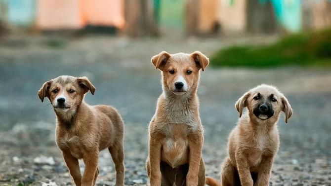 """Общо 169 кучета от приютите на ОП """"Екоравновесие"""" са намерили дом през януари"""